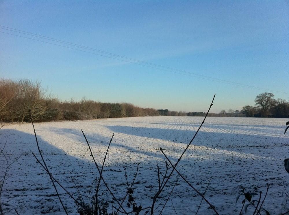 More snowy pics!